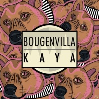 Bougenvilla - Kaya