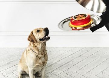 Первая dog friendly новогодняя елка Сергея Лазарева и «Пудель-Штрудель»